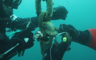 Lucrari mentenanta balize mai 2014 Constanta realizata de Nemo Pro Diving