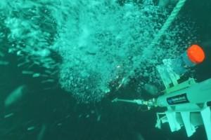 Montare balize INCD GeoEcoMar Constanta - Nemo Pro Diving 003