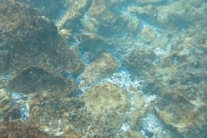 Peisaje din Marea Neagra - Nemo Diving Center 001