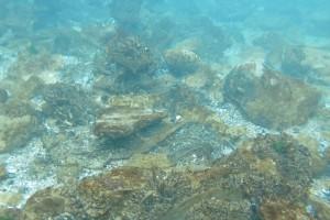 Peisaje din Marea Neagra - Nemo Diving Center 004