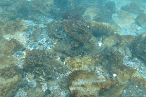 Peisaje din Marea Neagra - Nemo Diving Center 005