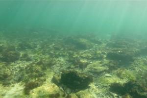 Peisaje din Marea Neagra - Nemo Diving Center 202