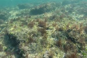 Peisaje din Marea Neagra - Nemo Diving Center 203
