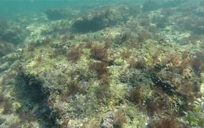 Peisaje din Marea Neagra – fotografii realizate de Nemo Diving Center