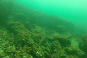 Peisaje din Marea Neagra - Nemo Diving Center 204