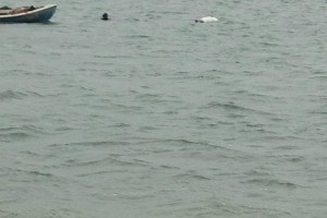 Recuperare ambarcatiune si ATV - Turnu Magurele - Nemo Pro Diving 009