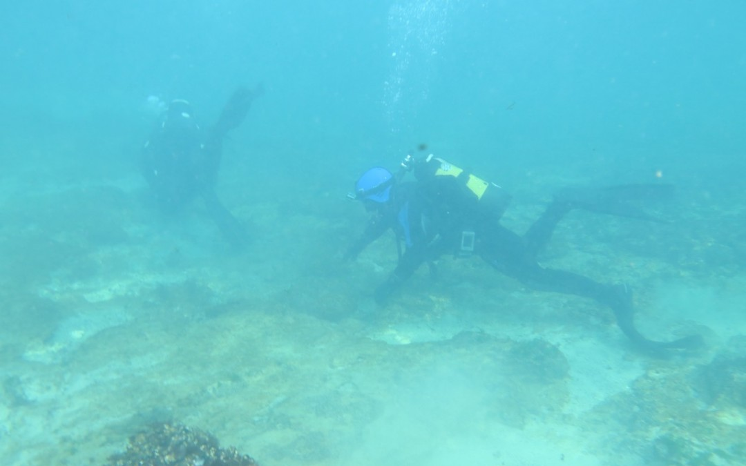 Scufundare la corabie in Eforie Sud decembrie 2014 cu Nemo Diving Center
