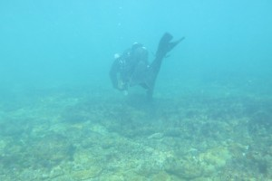 Scufundare la corabie in Eforie Sud decembrie 2014 - Nemo Diving Center 006