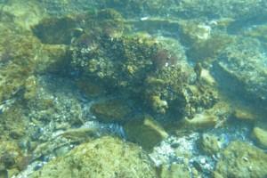 Scufundare la corabie in Eforie Sud decembrie 2014 - Nemo Diving Center 009
