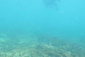 Scufundare la corabie in Eforie Sud decembrie 2014 - Nemo Diving Center 011