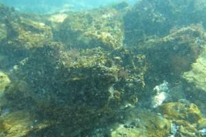 Scufundare la corabie in Eforie Sud decembrie 2014 - Nemo Diving Center 012