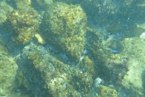 Scufundare la corabie in Eforie Sud decembrie 2014 - Nemo Diving Center 013