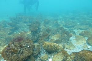 Scufundare la corabie in Eforie Sud decembrie 2014 - Nemo Diving Center 015