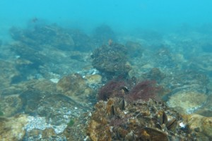 Scufundare la corabie in Eforie Sud decembrie 2014 - Nemo Diving Center 016