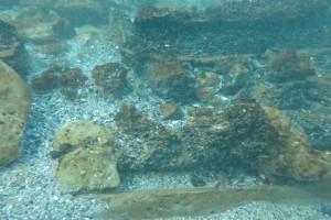 Scufundare la corabie in Eforie Sud decembrie 2014 - Nemo Diving Center 017