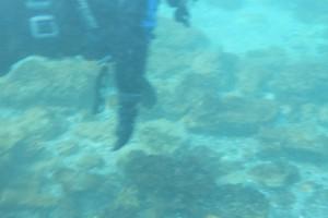 Scufundare la corabie in Eforie Sud decembrie 2014 - Nemo Diving Center 018