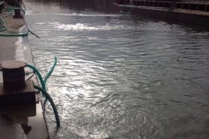 ramfulare barja pe canalul Dunare-Marea Neagra la Cochirleni - Nemo Pro Diving 212